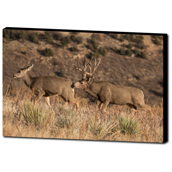 Deer 7 - Premium Canvas Gallery Wrap
