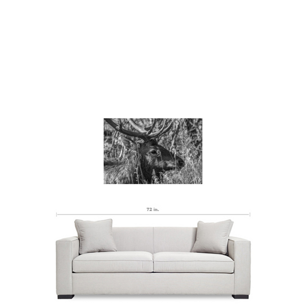 A Watchful Eye - Premium Canvas Gallery Wrap