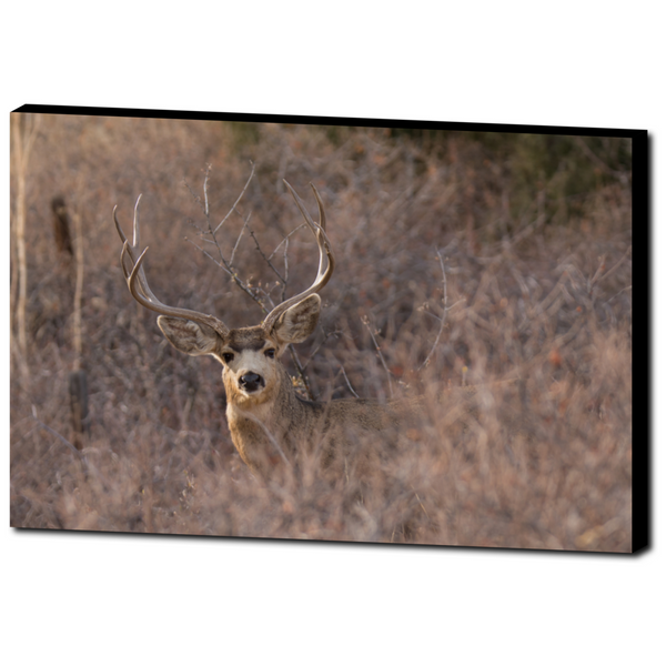 Deer 10 - Premium Canvas BLACK Wrap