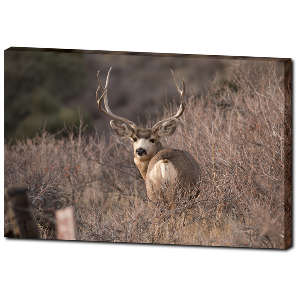Deer 1 - Canvas