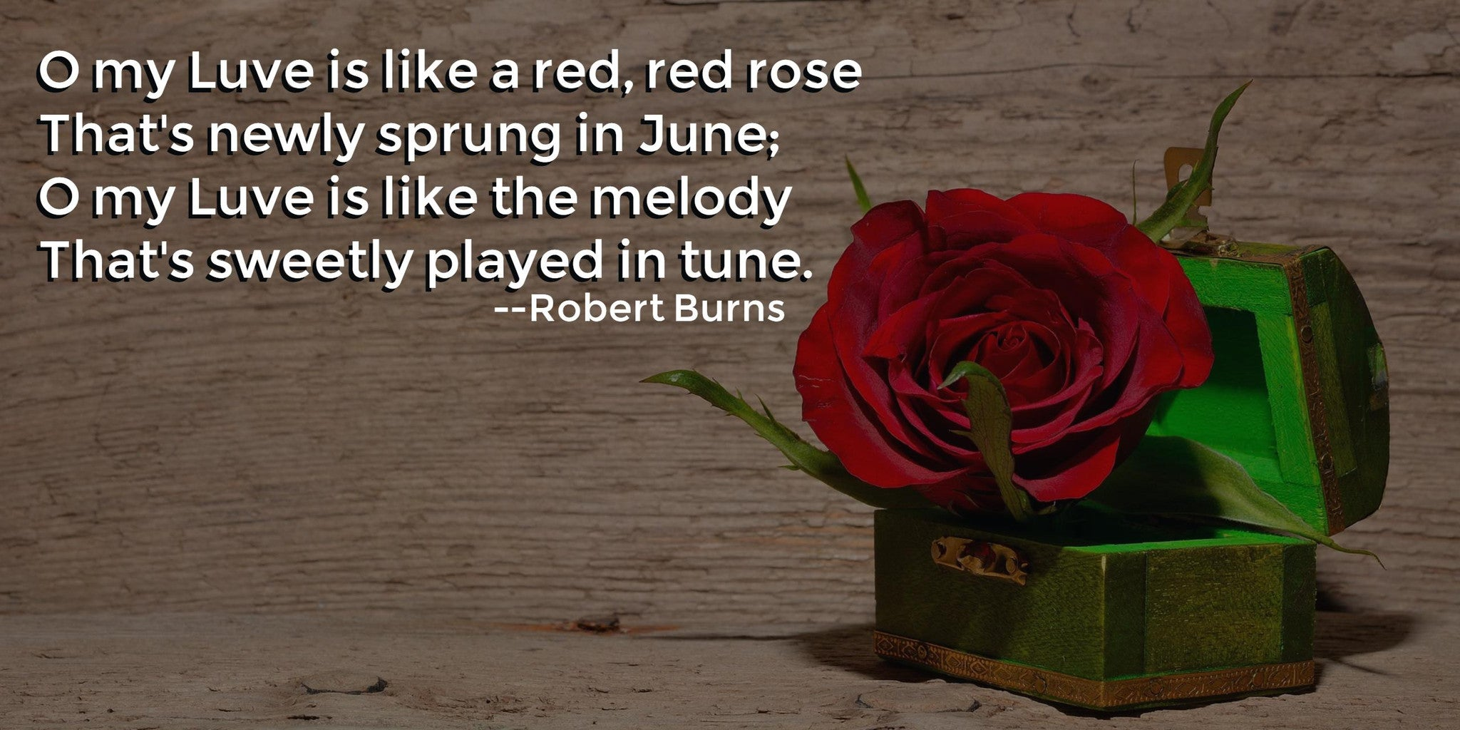 A Red, Red Rose Poem
