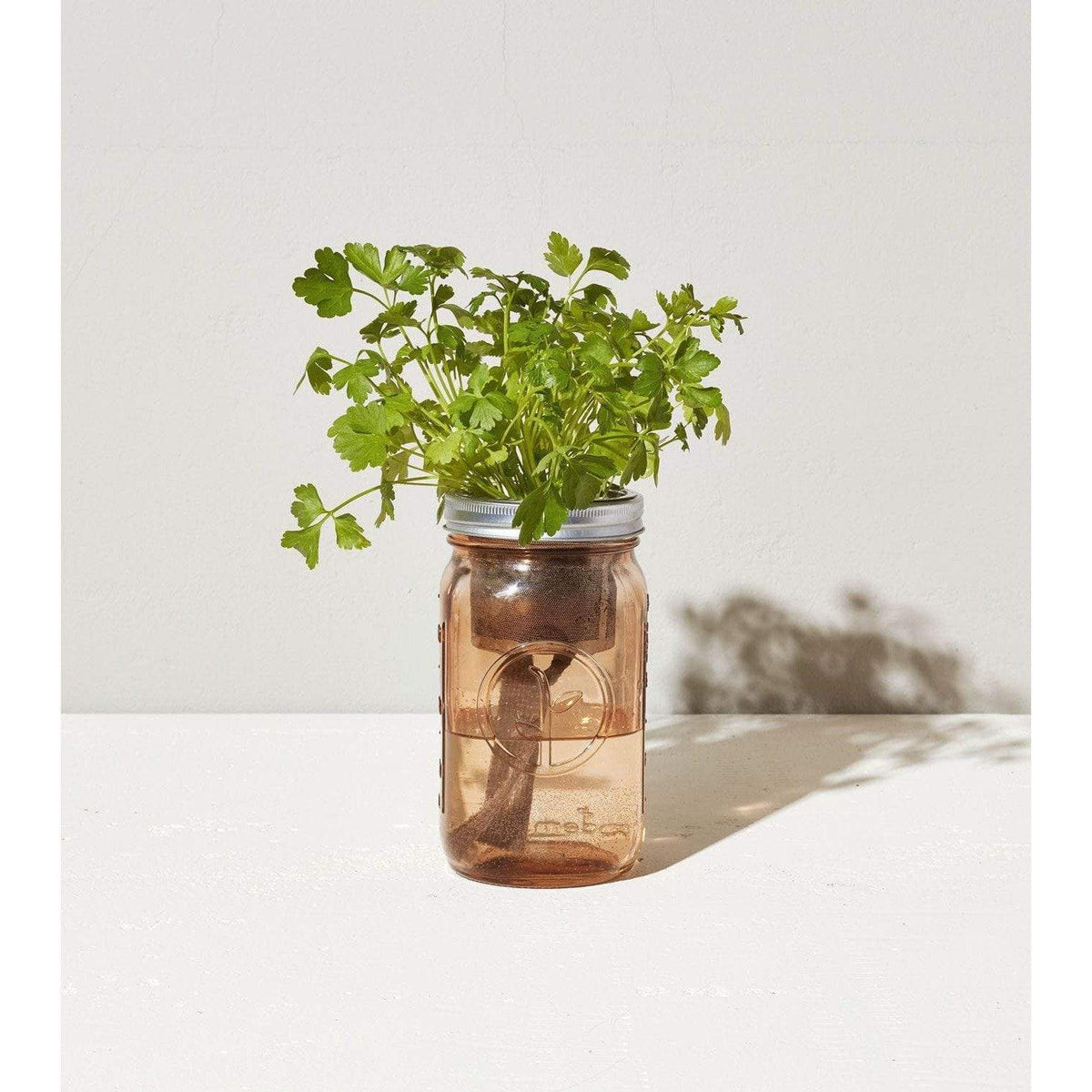 Garden Jar Indoor Hydroponic Kit - Parsley