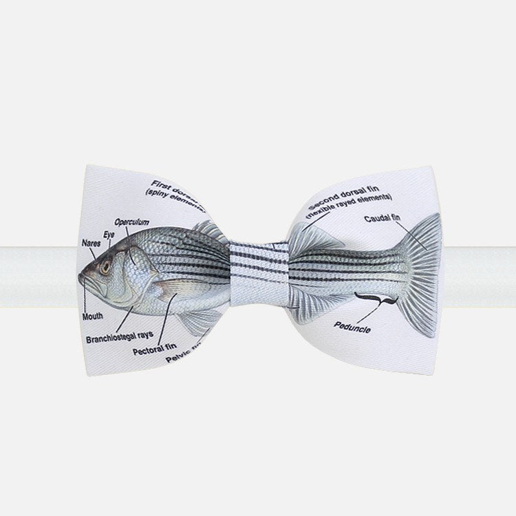 The Fish Bow Tie - Bowties - 1