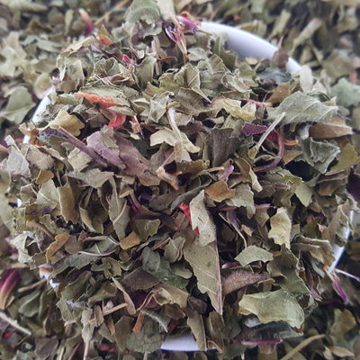 Bee Balm Tea, Herbal Tea Tea Life