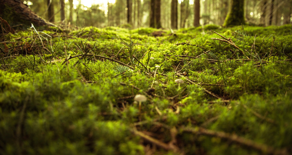 moss_in_forest