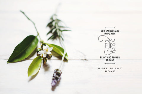 Pure Plant Home Coconut Candles