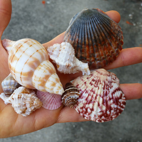 Shells after treatment