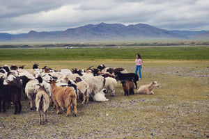 A Cashmere Story in Mongolia