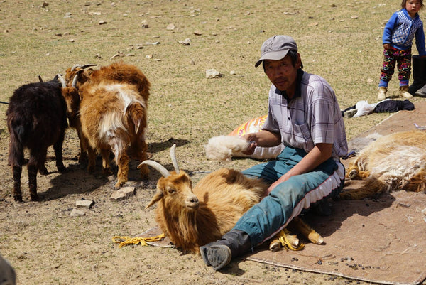 homadic, nomadic family in countryside Mongolia
