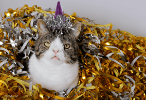 Tips For Keeping Your Pets Safe On New Year's Eve
