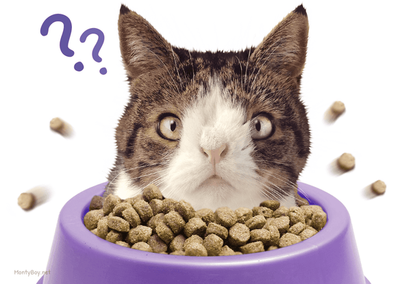 The Best Cat Food