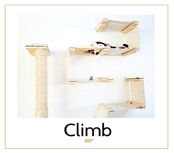 The Cat Mod - Climb