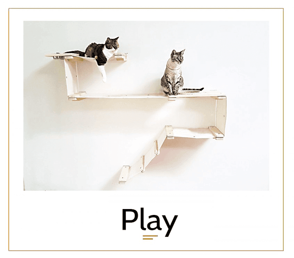 The Cat Mod - Play