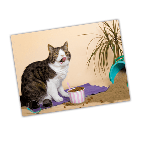 Monty Boy - Postcards - Merchandise - Monty Boy