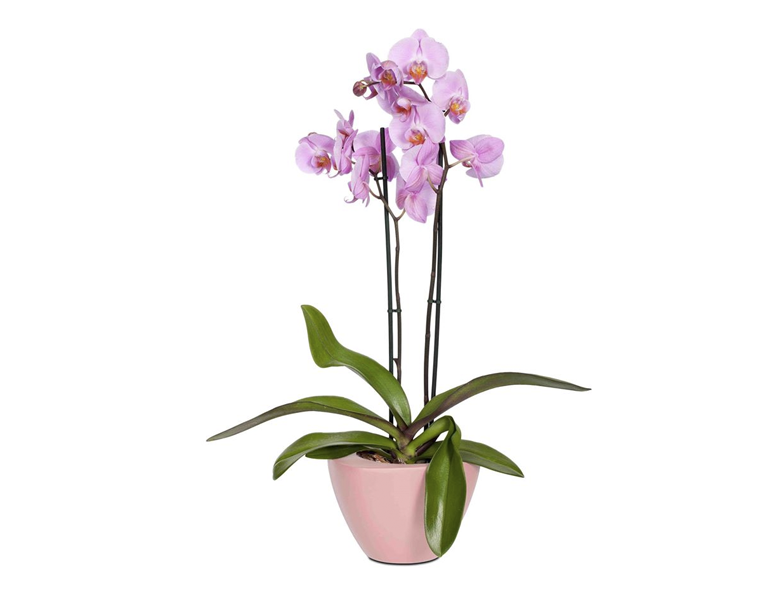 CAPI Orchid Planter - WHITE