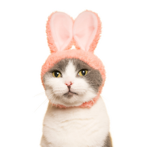 Cat Hat - Rabbit