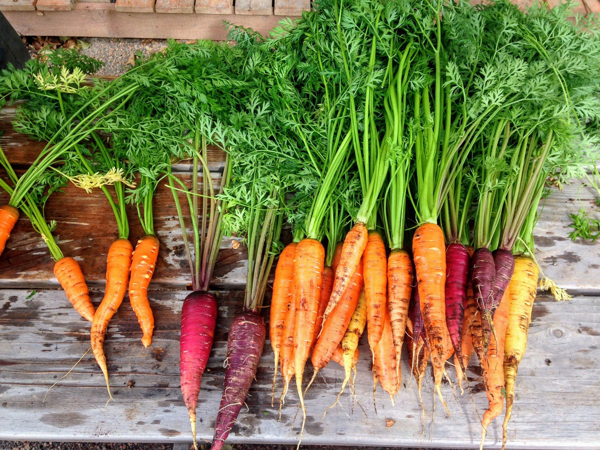 Carrots: Do they Really Help you See in the Dark?