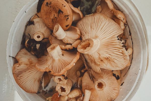 Fun Fact Friday - mushrooms and vitamin D