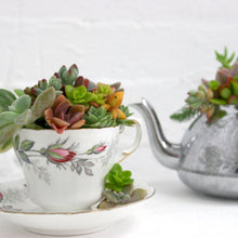 Succulent Sculpture Tea Party