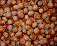 Filberts Hazelnuts - Squirrels and More