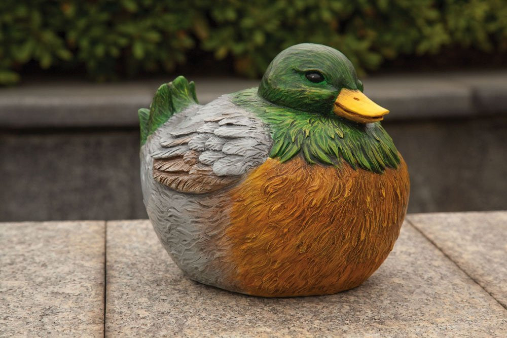 Portly Mallard Duck - Squirrels and More