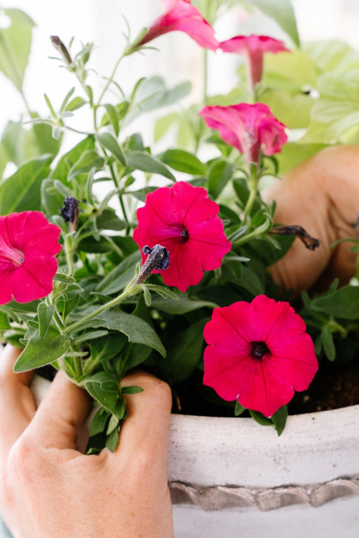 Planting Flower Pots Late in the Season