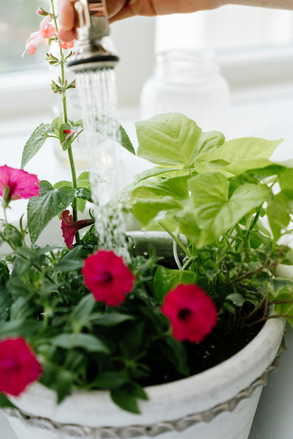 Watering Your Planter Pots and Flowers