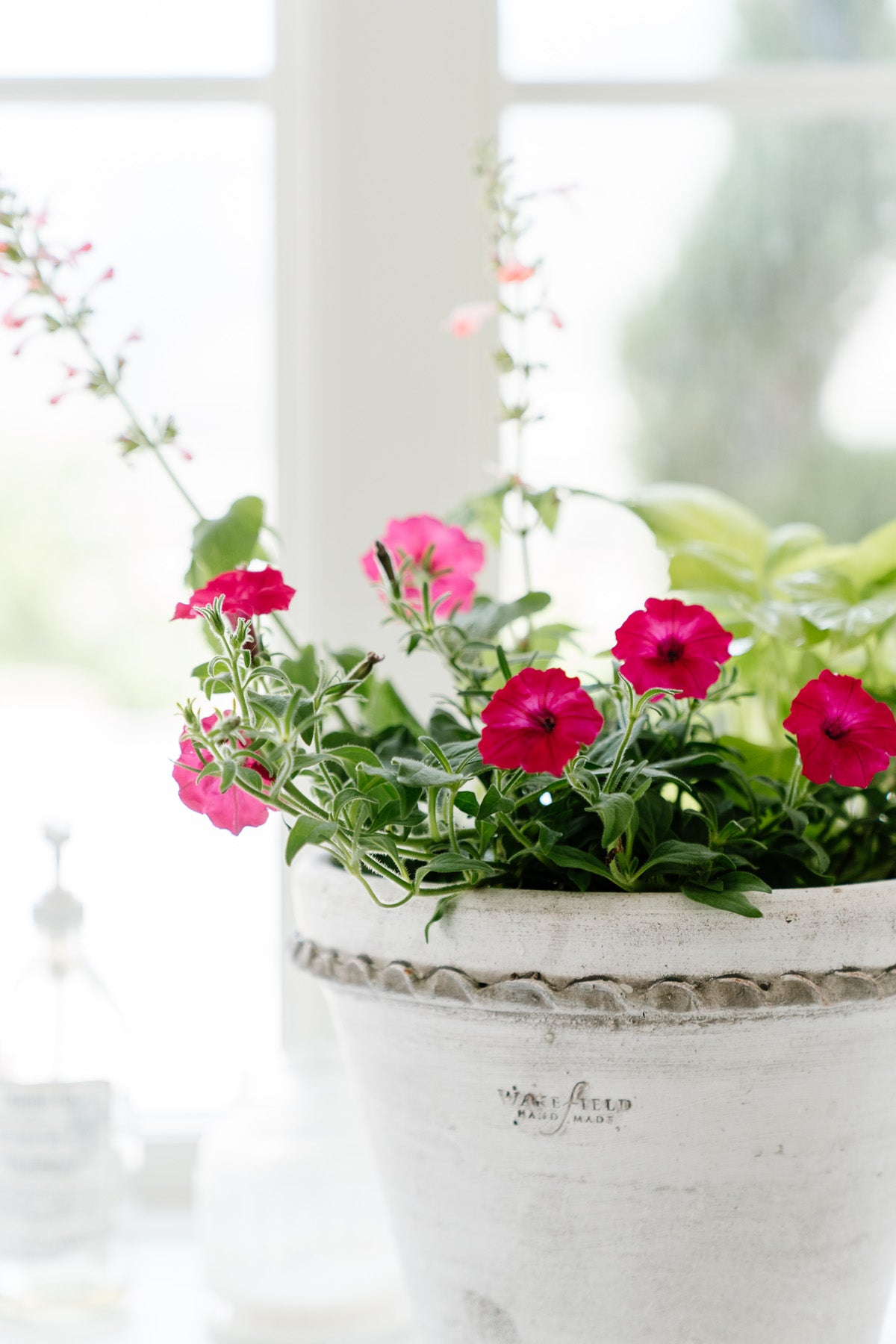 Flowers for Summer Planters Indoor and Outdoor
