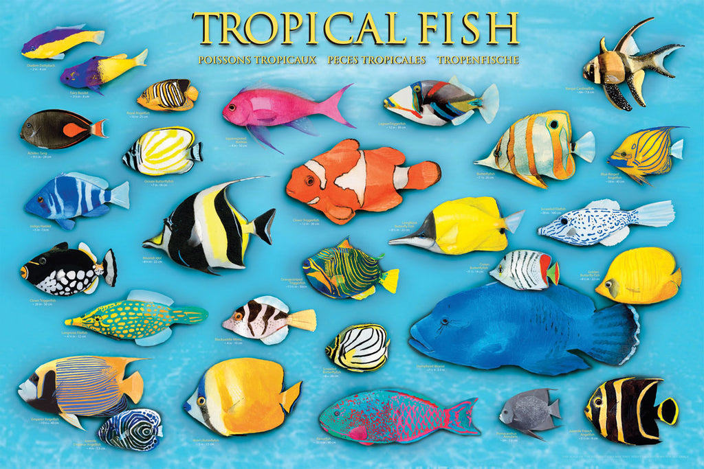 24 x 36 inch Non-Laminated Paper Poster Depicting Illustrations of Various Tropical Fish in a Background of Bright Blue Water by EuroGraphics.