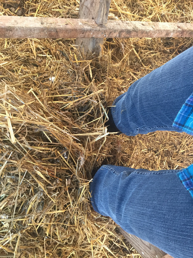 Chicken Manure and Straw