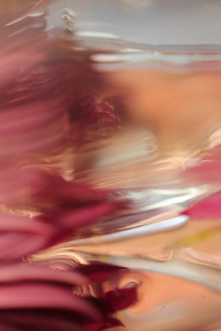 magenta abstract photography, contemporary interior design, abstract photography for sale