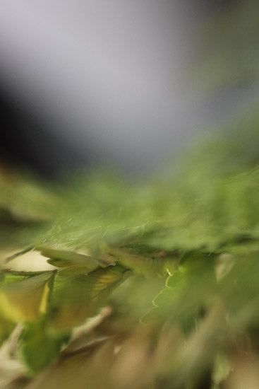 abstract nature photography, art for healthcare, green photography