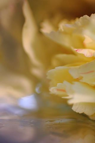 abstract photography, inspired by nature, yellow abstract photograph