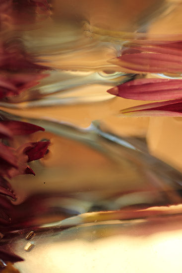 magenta brown abstract photography for sale, abstract photograph, oversized photography