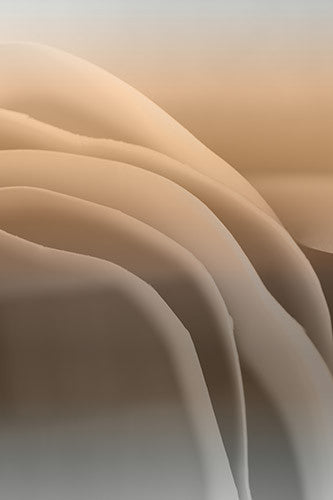 abstract brown photography, artwork for sale, contemporary art, transitions, color