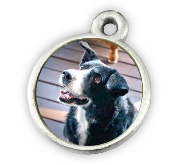 photo charm for photo charm bracelet pet memorial jewelry dog bracelet