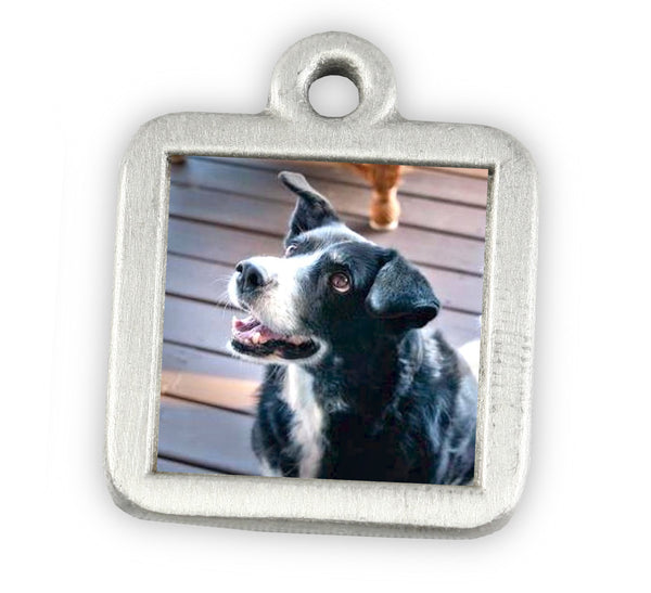 picture charm photo charm for pet memorial jewelry dog charm bracelet