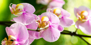 OrchidGain Plant Food & Fertilizer