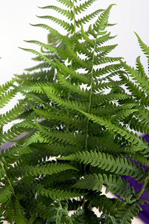 Southern Living Fern Southern Wood (2.5 Quart)