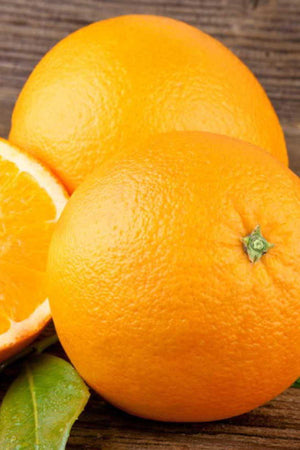 Glen Navel, Fruit Citrus Tree (Excludes: CA, AZ, LA, Tx), 1 Gallon for $ 52.95 at Root 98 Warehouse