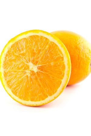 Dwarf Glen Navel Tree, Seedless Orange Citrus (Excludes: CA,TX,LA,AZ) for $ 49.95 at Root 98 Warehouse