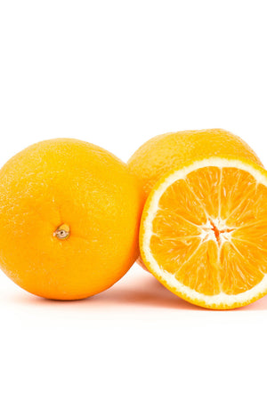 Dwarf Glen Navel Tree, Seedless Orange Citrus (Excludes: CA,TX,LA,AZ)