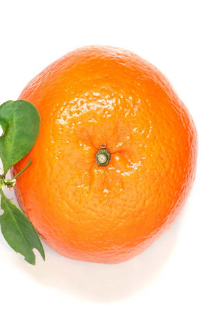 Dwarf Temple Orange Tree, Citrus (Excludes: CA, TX, LA, AZ, AK, HI, PR) for $ 49.95 at Root 98 Warehouse