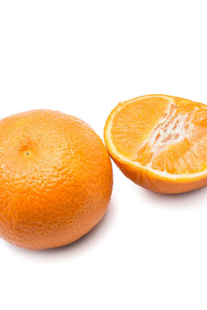 Fina Sodea Tree, Seedless Clementine Mandarin Citrus (Excludes: CA,TX,LA,AZ) for $ 49.95 at Root 98 Warehouse