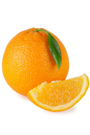 Hamlin Orange Tree, Nearly Seedless Citrus (Excludes: CA,TX,LA,AZ)