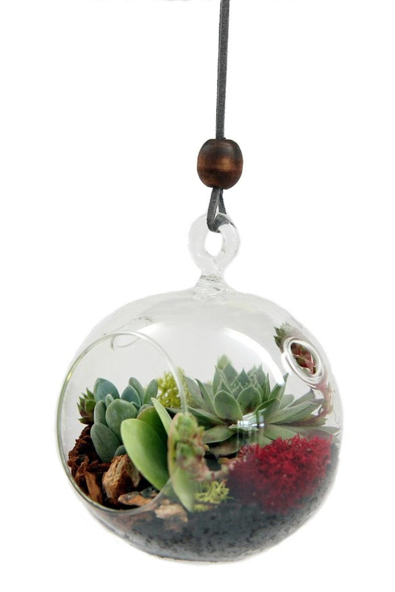 "Hanging Globe Succulent Terrarium Planter, 4"" Container, Plants Not Included"