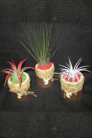 Air Plant with Holiday Reindeer Planter (Excludes Ca, Az), Size: 1 Pack