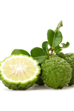Kaffir Lime Aromatic Fruit Citrus Tree Plant (Thai Southeast Asian Cooking, Essential Oil) (Cant Ship AZ CA LA TX)