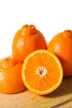 Minneola Tangelo Tree, Mandarin Grapefruit Hybrid Citrus (Excludes: CA,TX,LA,AZ) for $ 49.95 at Root 98 Warehouse