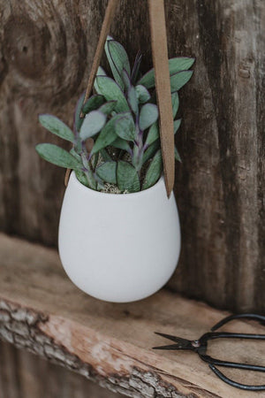 White Matte Hanging Succulent Planter, 4 in pot with Live Plant Houseplant